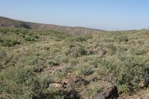 42 درصد مراتع زنجان فقر پوشش گیاهی دارند