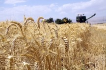 28 مرکز خرید تضمینی از کشاورزان قزوینی فعال می شود