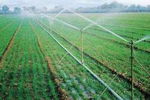 گسترش مزارع توت فرنگی و بهره برداری از 98 طرح کشاورزی در سقز