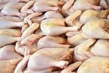 800 تن گوشت مرغ در کهگیلویه و بویراحمد تولید شد