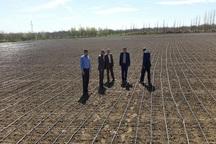 آبیاری نواری در هزار هکتار از مزارع میاندوآب اجرا می شود