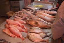 16 واحد عرضه ماهی و میگو در بوشهر تعطیل شد