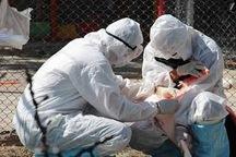 پایش آنفلوانزای فوق حاد پرندگان در آذربایجان شرقی آغاز شد