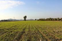 کردستان در گسترش و توسعه پروژه ایکاردا موفق عمل کرد