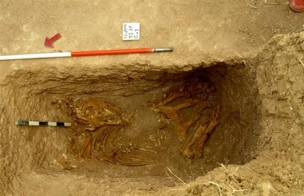 کشف سومین اسب اشکانی  تدفین اسب به همراه صاحبش در دوره اشکانی