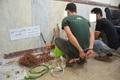 سارقین سیم و کابل در تاکستان دستگیر شدند