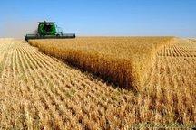 170 میلیارد ریال به گندم کاران تکاب پرداخت شد