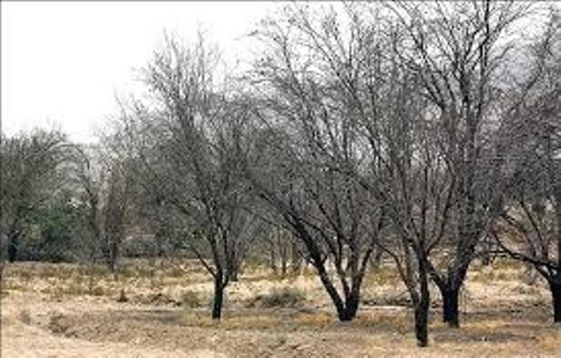 آبرسانی سیار به باغات بحرانی لردگان امکان ندارد