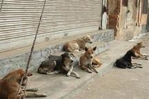 سگ های ولگرد در قشم جان کودک سه ساله را گرفتند