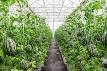 گلخانه های کوچک در سمنان توسعه می یابد