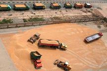 325 هزار تن گندم از کردستان به دیگر استان ها ارسال شد
