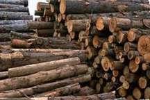 طرح مبارزه با قاچاق چوب در آمل کلید خورد