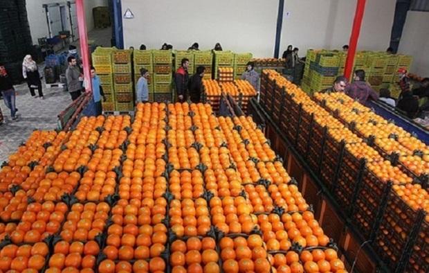 تمهیدات لازم برای تامین میوه ایام نوروز اندیشیده شده است