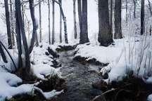 بارش 13 میلی متری باران در نطنز   بارش برف در ابیانه