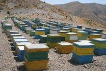 طرح آمارگیری کلنی های زنبور عسل در قزوین اجرا می شود