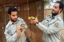 کشف 172 پرنده قاچاق در آبادان