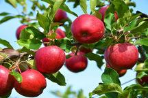 آذربایجانشرقی رتبه پنجم تولیدات باغی کشور را دارد