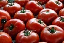14 کامیون حامل گوجه فرنگی از مرز شلمچه عودت داده شد