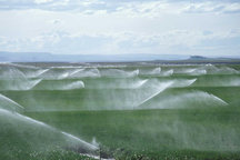 طرح بهینه سازی مصرف آب کشاورزی در 4 شهر خراسان شمالی در دست اجراست