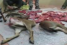 شکارچی متخلف در پارک ملی گلستان دستگیر شد