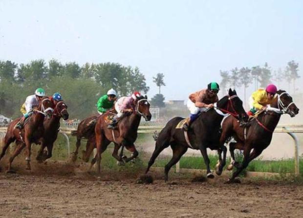 2500 اسب اصیل ترکمن در گلستان شناسایی شد