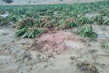 باران 90 میلیارد ریال به شهرستان لنده خسارت زد