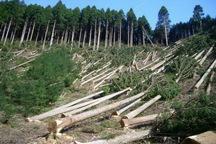 اجرای طرح زراعت چوب در استان تهران سرعت می گیرد