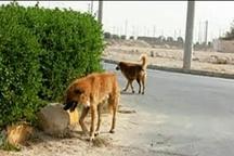 حاشیه های شهر در قُرق سگهای بلاصاحب