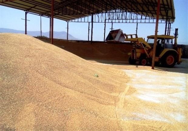 متخلفان نباید خریدار گندم فارس باشند