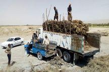 3 تُن چوب قاچاق در شاهیندژ توقیف شد