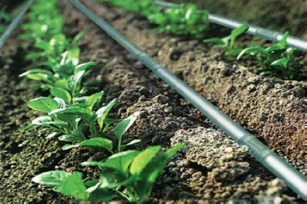 80 هکتار مزرعه در چالدران به آبیاری نوین مجهز شد