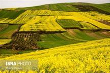 طلای چرب در استان سمنان تا 5 برابر افزایش مییابد