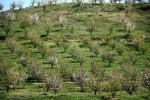 گرانی نهال از مشکلات باغداری کشور است