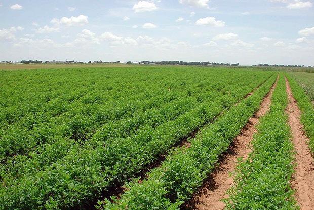 توسعه زیرساخت های کشاورزی اولویت اتاق بازرگانی است