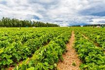 36 طرح کشاورزی در ایلام افتتاح می شود