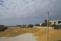 افزون بر هفت هزار تن گندم به مراکز ذخیره سازی یزد تحویل شد