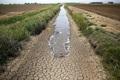 کل جمعیت خراسان جنوبی درگیر خشکسالی است