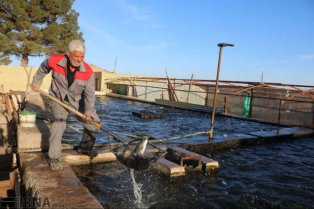 سالانه ۱۲ هزار تُن ماهی در شوشتر تولید میشود