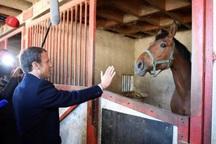 عکس/ ژست انتخاباتی با اسب
