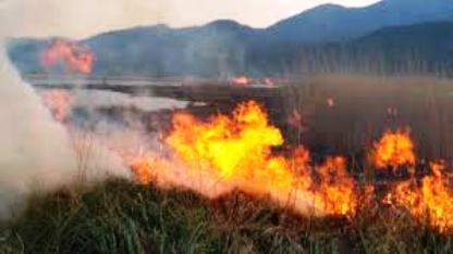 فعالیت 6 گروه اطفای حریق در عرصه های منابع طبیعی شهرستان سلسله