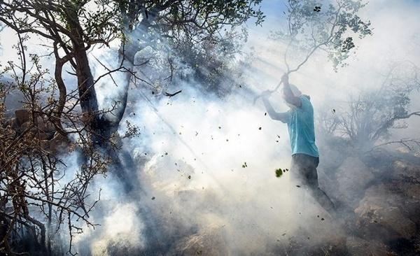 انتقاد از آتش زدن درختان کهنسال پاسارگاد