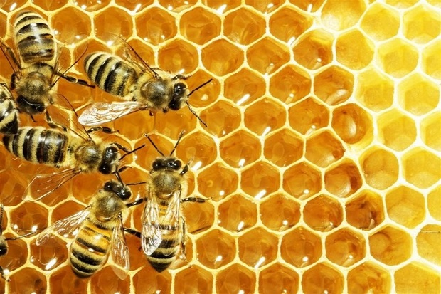 700 تن عسل در شاهین دژ تولید شد
