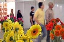 سهم استان تهران در صادرات گل 5 میلیون دلار است