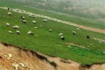 ۱۸۸ هکتار پرونده تخلف در زمینه تصرف اراضی منابع طبیعی در ملایر تشکیل شد