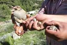 بازگرداندن جانوران به محیط زیست فارس