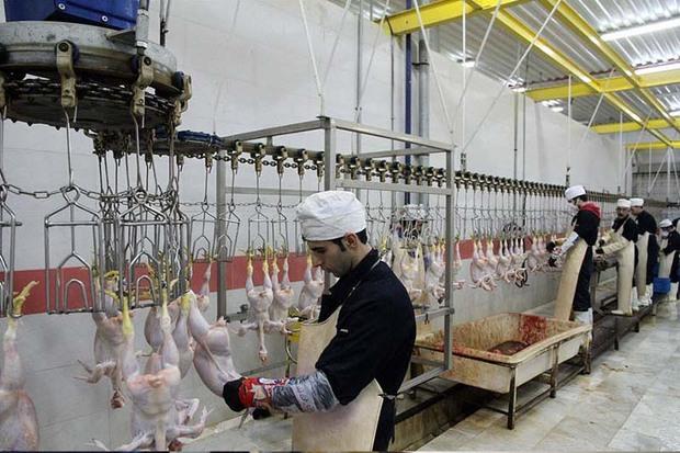 336901 کیلوگرم لاشه مرغ در کشتارگاه های زنجان ضبط شد