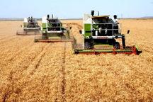 مزارع گندم دیم بیمه شاخص تولید می شوند