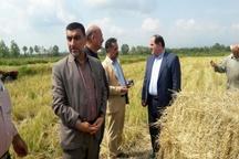 سیاست دولت  حمایت از صادرات محصولات کشاورزی است