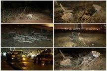 مجوز قطع درختان محله فرشته جنوبی صادر شده بود