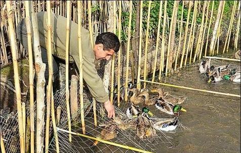 نسلکشی پرندگان مهاجر در ایران و عربستان!